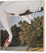 Audubon: Whooping Crane Wood Print
