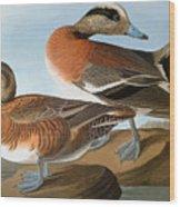 Audubon: Wigeon, 1827-38 Wood Print