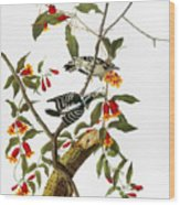 Audubon: Woodpecker, 1827 Wood Print