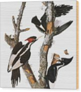 Audubon: Woodpecker Wood Print