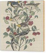 Audubon's Warbler Wood Print