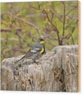 Audubon's Yellow Rumped Warbler Wood Print