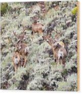August Bucks Wood Print
