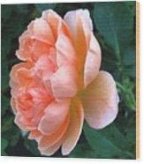 August Rose 09 Wood Print