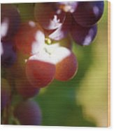 Auntie Thelma's Grapes - Ripening Wood Print