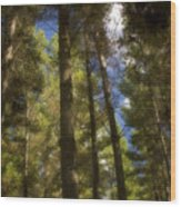 Aupouri Forest Wood Print