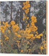 Aussie Gold Wood Print