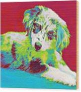 Aussie Puppy Wood Print