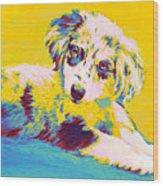 Aussie Puppy-yellow Wood Print