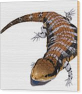 Australia Blue-tongued Skink Wood Print