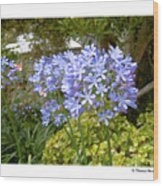 Australia Plant Life Wood Print