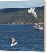 Australia - Seagulls And Trawlers Wood Print