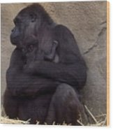 Australia - Baby Gorilla In Mums Arms Wood Print