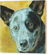 Australian Cattle Dog Blue Heeler On Gold Wood Print