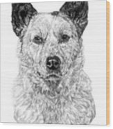 Australian Cattle Dog Wood Print