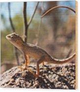 Australian Dragon Wood Print