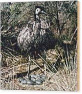 Australian Emu Wood Print