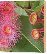 Australian Flora2 Wood Print