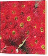 Australian Native Eucalyptus Flowers Wood Print
