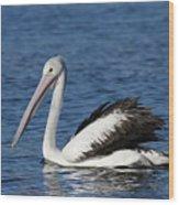 Australian Pelican B Wood Print