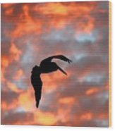 Australian Pelican Silhouette Wood Print