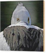 Australian Pelican Wood Print