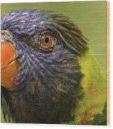 Australian Rainbow Lorikeet Wood Print