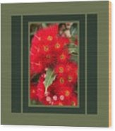 Australian Red Eucalyptus Flowers With Design Wood Print