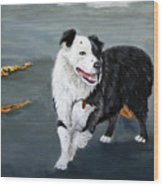 Australian Shepard Border Collie Wood Print
