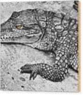 Australian Shy Crocodile  Wood Print