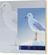 Australian Wildlife - Silver Gull Wood Print