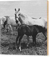 Austria: Horse Farm Wood Print
