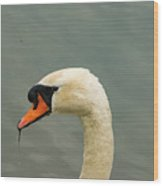 Austrian White Swan Wood Print