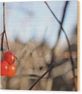 Automn Fruits Wood Print