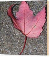 Autum Maple Leaf 2 Wood Print