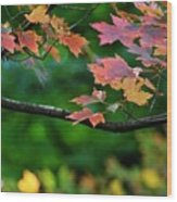 Autumn Along The Branch Wood Print