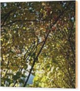 Autumn Archway Wood Print