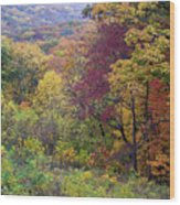 Autumn Arrives In Brown County - D010020 Wood Print