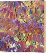 Autumn Ash Tree 1 Wood Print