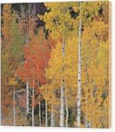 Autumn Aspen Trees Wood Print