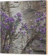 Autumn Asters Wood Print