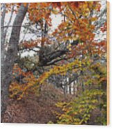 Autumn At Beech Forest Wood Print