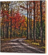 Autumn At Hickory Run Wood Print