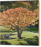 Autumn At Nikka Yuko Wood Print