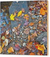 Autumn B 2015 116 Wood Print