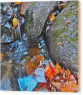 Autumn B 2015 117 Wood Print
