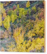 Autumn Background  Wood Print