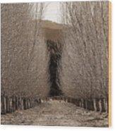 Autumn Bares Her Trees Wood Print