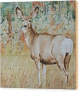 Autumn Beauty- Mule Deer Doe  Wood Print