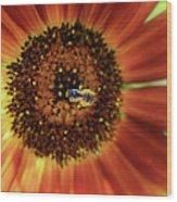 Autumn Beauty Sunflower Wood Print
